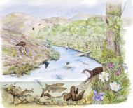 Riparian Habitat